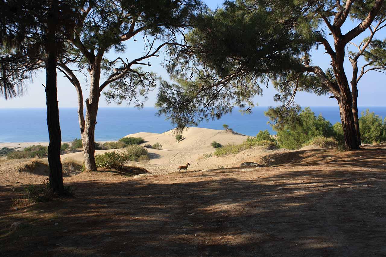 Patara sand dunes